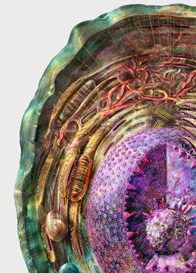 Viniferamine Animal Cell Layers - Internal