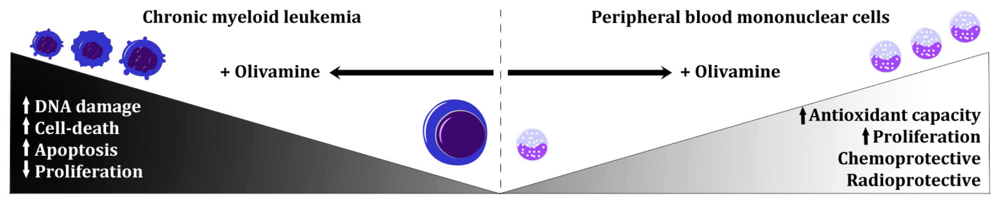 Effects of olivamine on normal and cancer cells.jpg